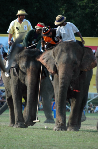 image-of-Elephant-Polo