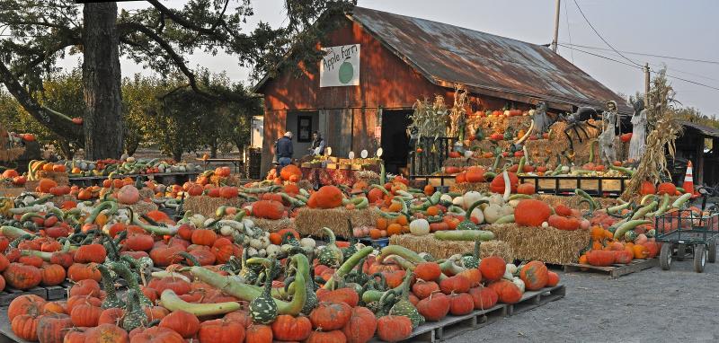 Sonama_count7-farm_pumpkins_Hales_Apple_Farm