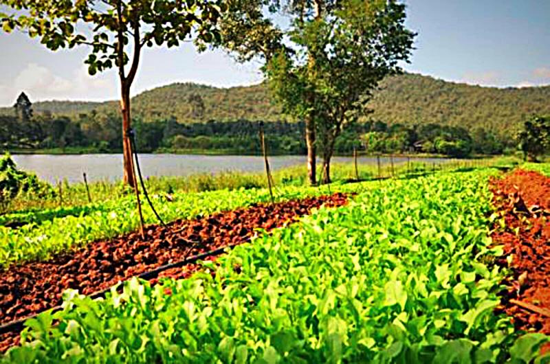 image-of-monkey-organic-farm-in-chiang-mai-thailand
