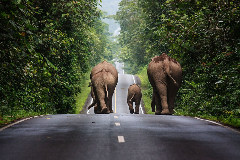 Thailand-khao-yai-national-park-elephants-credit-khunkay