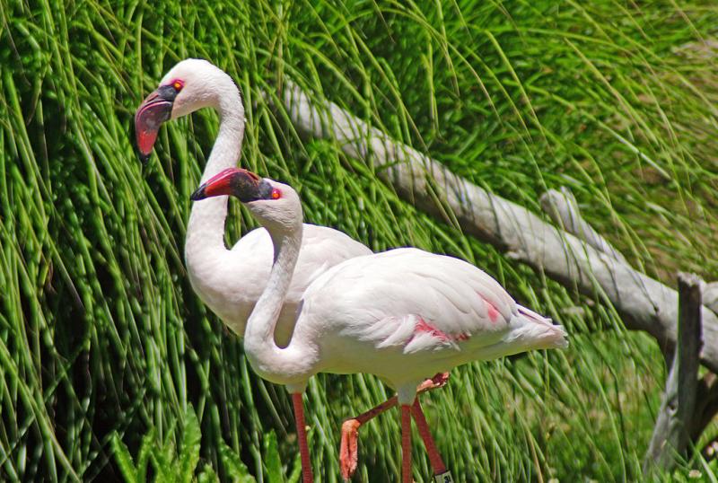 Usa_Oakland_Zoo-credit-allie-caulfield